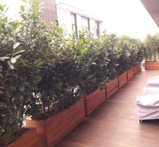Jardiniere Lemn Exotic Cumaru